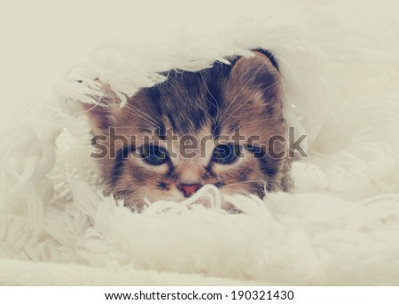 tabby kitten looks #190321430