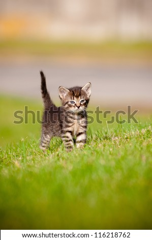 tabby kitten outdoors portrait - stock photo
