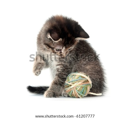 Tabby kitten playing with yarn on white background