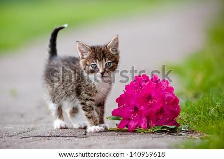 tabby kitten portrait with a flower