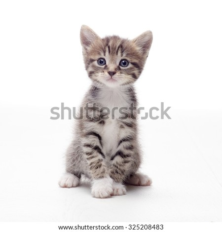 tabby kitten sitting on white background