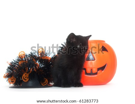 Tabby kitten sitting with Halloween decorations on white background