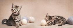 Tabby kittens with balls of woolen yarn. Web banner.