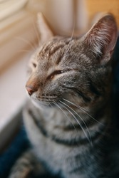 Tabby pussycat sleep near windowsill. Domestic cat is resting in pets couch. Window and sunlight in background. Close up animal portrait.