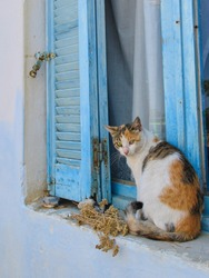 Tabby Stray Cat Resting On A Windowsill In Front Of A Closed, Aged Wooden Window With Old Open Blinds Painted In A Typical Greek Cycladic Blue Color.