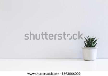 Table with succulent plant in flowerpot agianst bright grey wall.