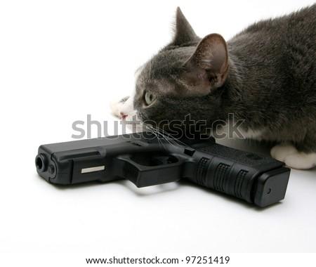 Tactical Guard Cat