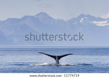 Tail of humpback whale in front of mountain range.