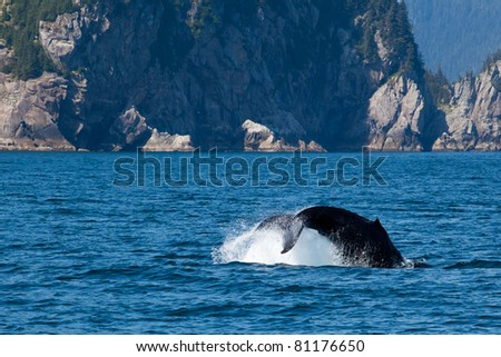 Tail of the humpback whale diving into the sea with the scenic of faraway island in Alaska.