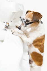 tailor sewing theme. Dog using sewing machine looking attentively with glasses. sews white T-shirt. Clothing designer tailor at work in creative process of making clothes. White background vertical