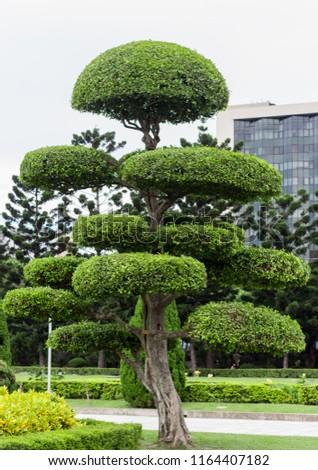 Taiwan tree near Liberty Square  #1164407182