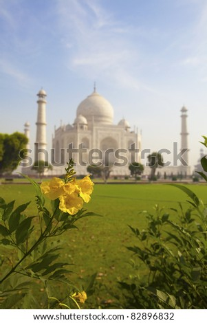 Taj Mahal and a yellow flower.