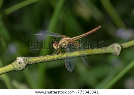 Take a close-up of a dragonfly #773345941