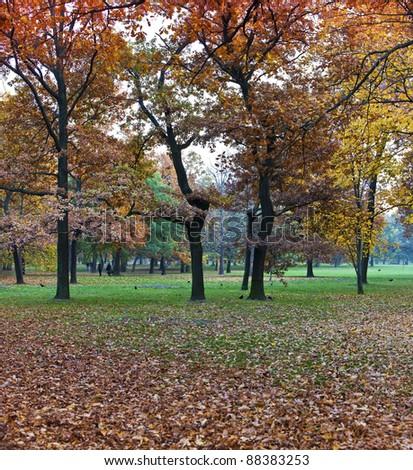 take a walk through fall setting