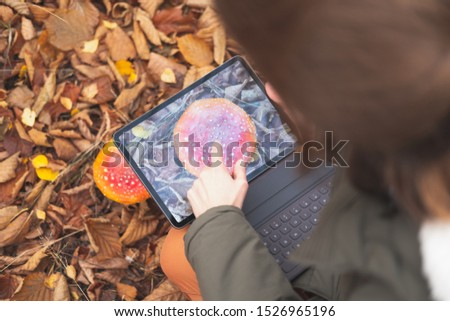 Taking a picture of a toadstool mushroom with a tablet computer. Female plant scientist or botanist photographs a wild mushroom in the forest, concept of researching nature and plants