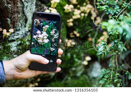 Taking a picture of mushrooms with a smart phone