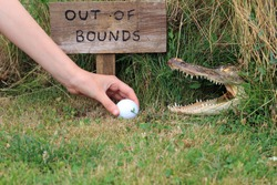 Taking A Risk Picking Up A Golf Ball After Being Hit Off Course And Landing In A Dangerous Area Out Of Bounds.