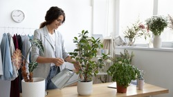 Taking care of green friends. Positive millennial woman employee office manager starting workday with watering flowers. Small business owner water indoor house plants in studio workroom shop using can