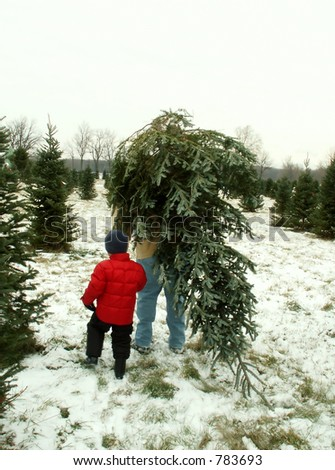 taking home the Christmas tree