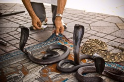 Taking pictures of a snake on the djemaa el afna square in Marrakech, Morocco.