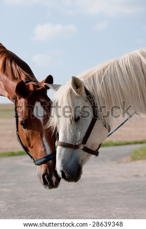 Talk of two horses in a field