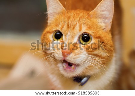 stock photo talking red cat closeup portrait the cat is serious and his expression is serious 518585803 - Каталог — Фотообои «Животные»