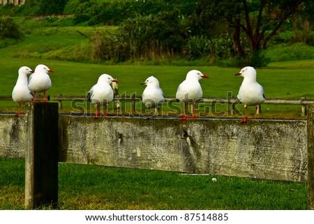 Talking seagulls