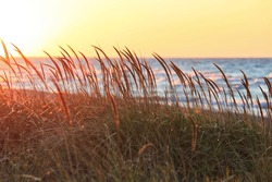 Tall beach grass glows in sunset light, in foreground of Lake Michigan located in the Indiana Dunes Lakeshore during Autumn in October