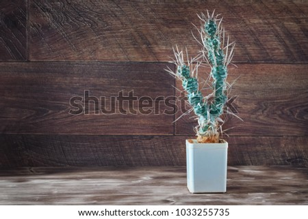 Tall cactus with paper-like spines. Unusual long cactus Tephrocactus articulatus in pot on dark wooden background. Rustic style. Copy space.