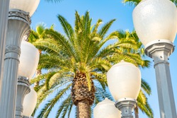 Tall California palm tree behind public art display of vintage street lamps at Urban Light in Los Angeles, California