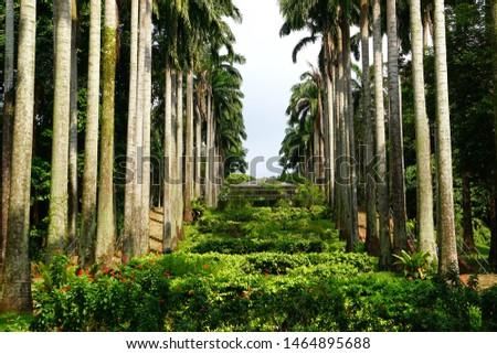 Tall coconut trees flank lush greenery #1464895688