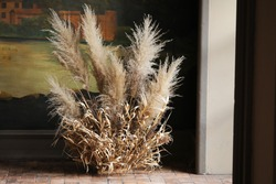Tall composition of dried pampas grass as home decoration. A fluffy reed panicles Cortaderia selloana against a dark interior background