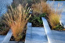 tall dry stalks of ornamental grasses in a flowerbed by the road perform a decorative function even in winter if the sun's rays illuminate them