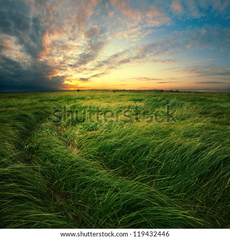 Tall grass are on the flood meadow on background of dramatic clouds during sundown.