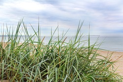 Tall grass on the seashore