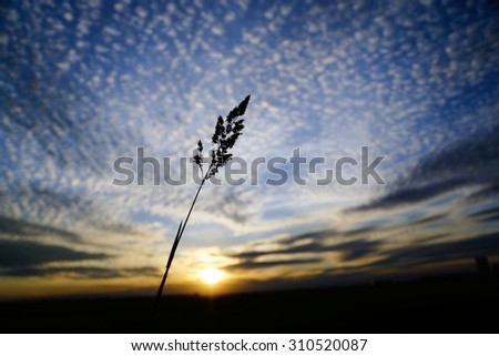 Tall Grass Silhouette On Tall Grass Silhouette At Sunny Cloudy Golden Sunset Quebec Canada 310520087 Free Photos Dramatic Golden Sunset Avopixcom