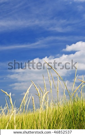 Tall green grass growing on sand dunes against cloudy sky
