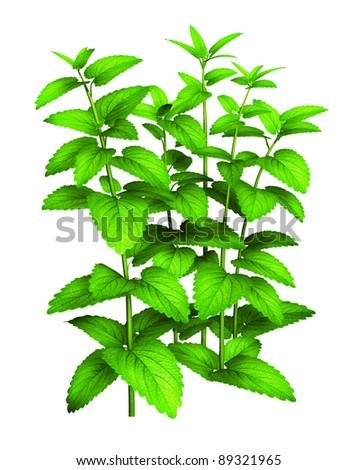 Tall green plant