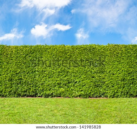 Tall hedge endless seamless pattern tall hedge with sky and grass