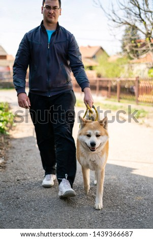 Tall man is walking orange akita dog on the yellow leash on the street. The back is blurred and the man is stepping at the same time as the japanese orange akita dog why looks friendly and obedient. #1439366687
