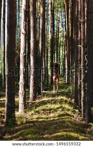 Young barefoot girl in forest Free Images and Photos