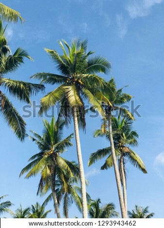 Tall palm trees, Nusa Penida island near Bali, Indonesia, summer beach vibes, travel - vertical photo