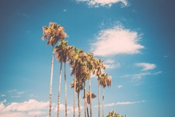 Tall palms on Promenade de la Croisette in Cannes, France. Stylized as old retro postcard, low contrast in shadows