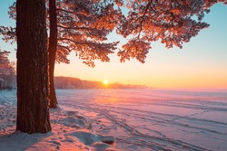Tall pine tree in the evening sunlight near frosty lake. Lake covered with snow. Clear colorful sky at winter dusk. Snowy christmas park. Fairy winter background.
