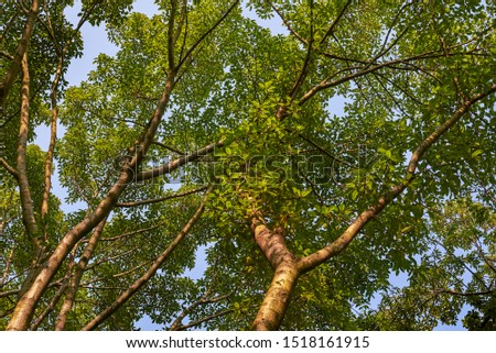 Tall tall trees and thick leaves #1518161915