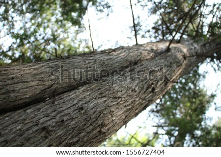 tall tall trees in the woods #1556727404