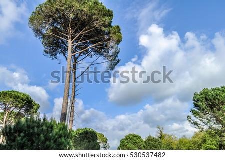 Tall tree #530537482