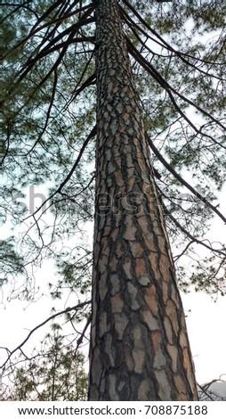 tall tree #708875188