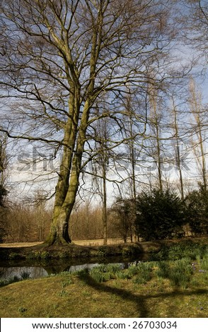 Tall tree from a wide angle perspective, Cambridgeshire, England