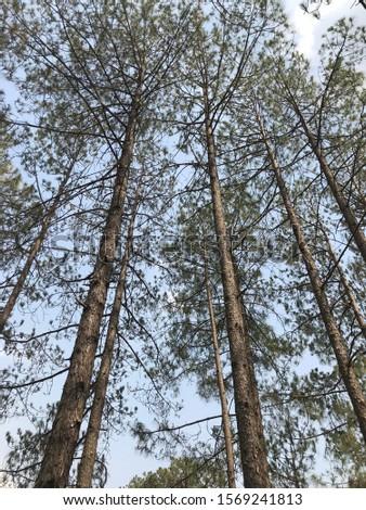 Tall trees #1569241813